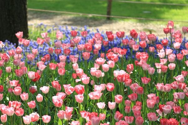 昭和記念公園 ブログサイズ2011_04_25 昭和記念公園 アルバムDPP_0266