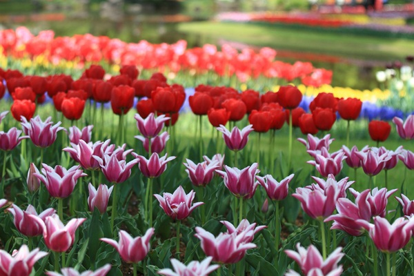 昭和記念公園 ブログサイズ2011_04_25 昭和記念公園 アルバムDPP_0075