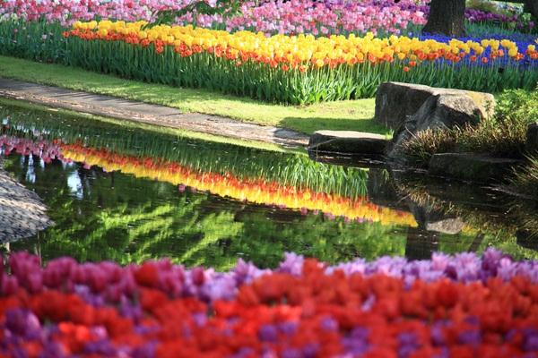 昭和記念公園 ブログサイズ2011_04_25 昭和記念公園 アルバムDPP_0274