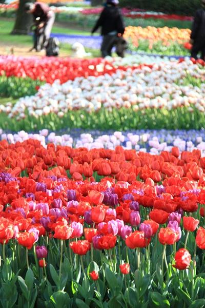 昭和記念公園 ブログサイズ2011_04_25 昭和記念公園 アルバムDPP_0276