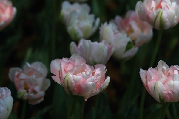 昭和記念公園 ブログサイズ2011_04_25 昭和記念公園 アルバムDPP_0089