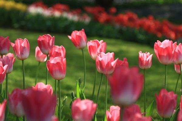 昭和記念公園 ブログサイズ2011_04_25 昭和記念公園 アルバムDPP_0263