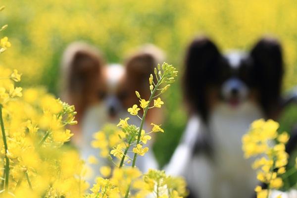 昭和記念公園 ブログサイズ2011_04_25 昭和記念公園 アルバムDPP_0232