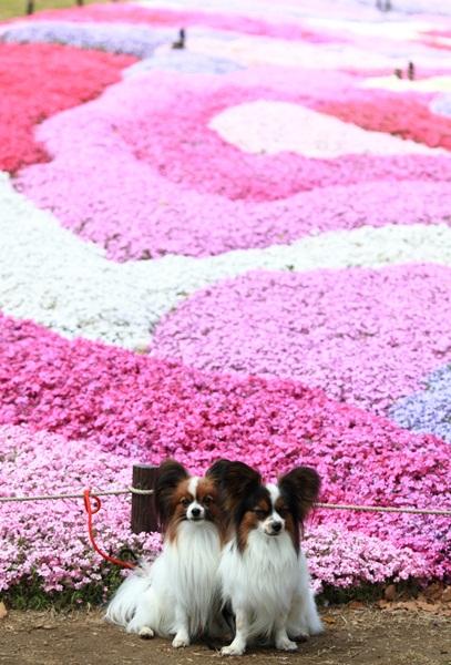 昭和記念公園 ブログサイズ2011_04_25 昭和記念公園 アルバムDPP_0042