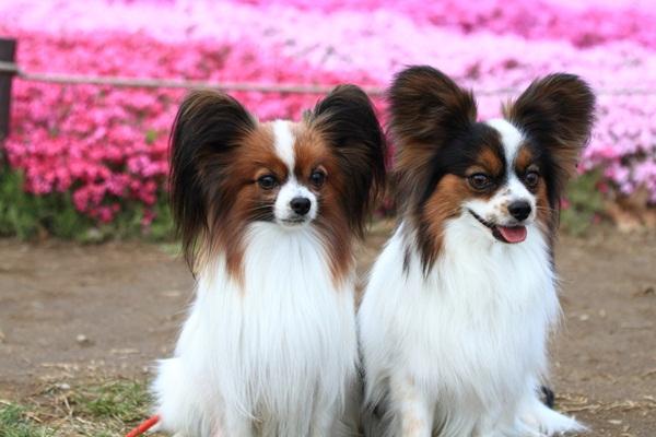 昭和記念公園 ブログサイズ2011_04_25 昭和記念公園 アルバムDPP_0036