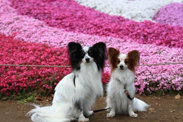 昭和記念公園 ブログサイズ2011_04_25 昭和記念公園 アルバムDPP_0037