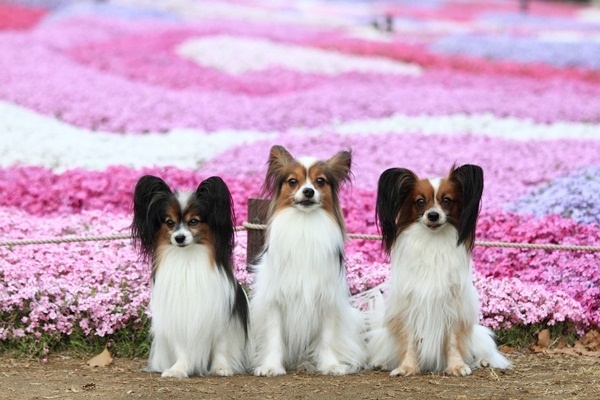 昭和記念公園 ブログサイズ2011_04_25 昭和記念公園 アルバムDPP_0033