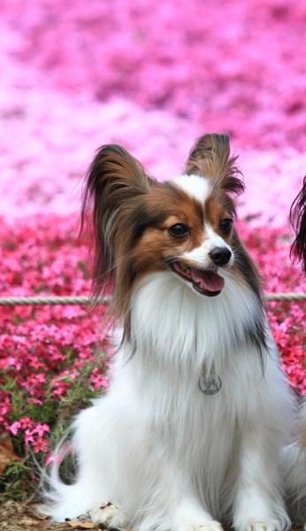 昭和記念公園 ブログサイズ2011_04_25 昭和記念公園 アルバムDPP_0021