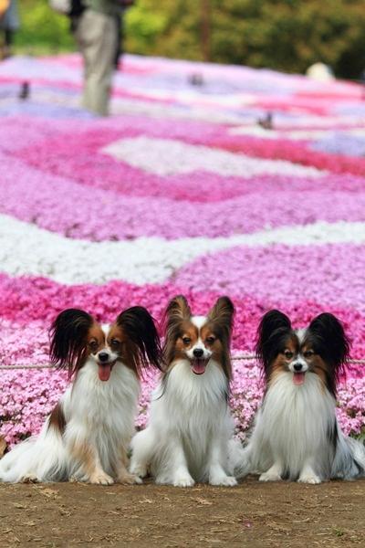 昭和記念公園 ブログサイズ2011_04_25 昭和記念公園 アルバムDPP_0026
