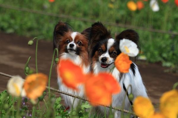昭和記念公園 ブログサイズ2011_04_25 昭和記念公園 アルバムDPP_0163