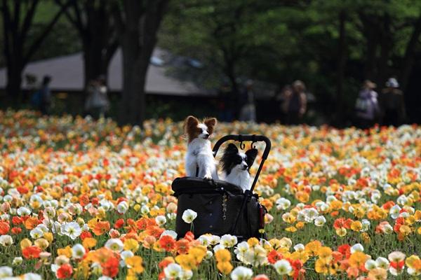 昭和記念公園 ブログサイズ2011_04_25 昭和記念公園 アルバムDPP_0150