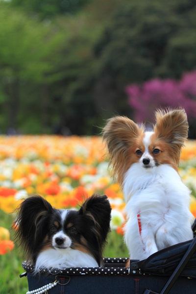 昭和記念公園 ブログサイズ2011_04_25 昭和記念公園 アルバムDPP_0200