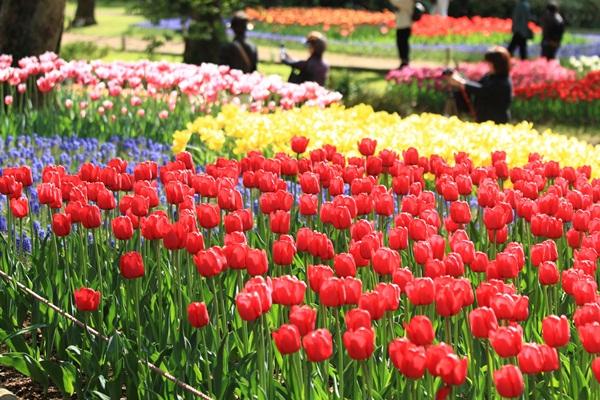 昭和記念公園 ブログサイズ2011_04_25 昭和記念公園 アルバムDPP_0264