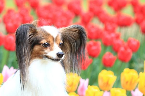 昭和記念公園 ブログサイズ2011_04_25 昭和記念公園 アルバムDPP_0125