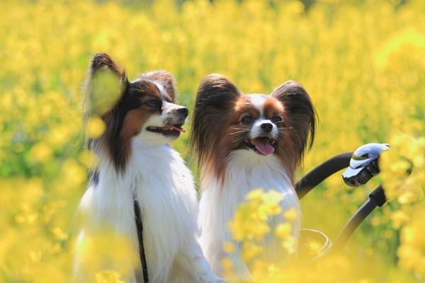 昭和記念公園 ブログサイズ2011_04_25 昭和記念公園 アルバムDPP_0222
