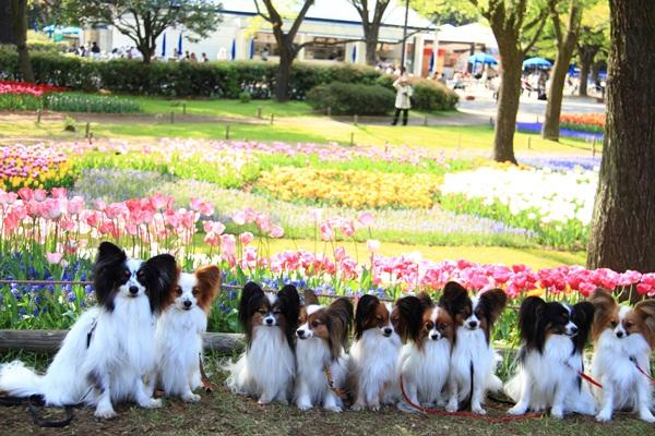 昭和記念公園 ブログサイズ2011_04_25 昭和記念公園 アルバムDPP_0269