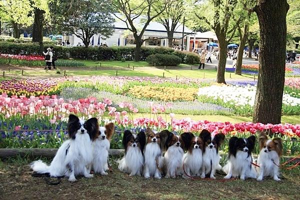 昭和記念公園 ブログサイズ2011_04_25 昭和記念公園 アルバムDPP_0272