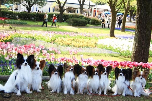 昭和記念公園 ブログサイズ2011_04_25 昭和記念公園 アルバムDPP_0267