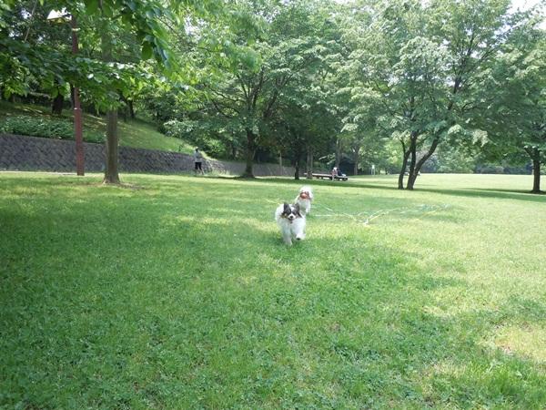 ふるさと公園 新緑DSCN0976