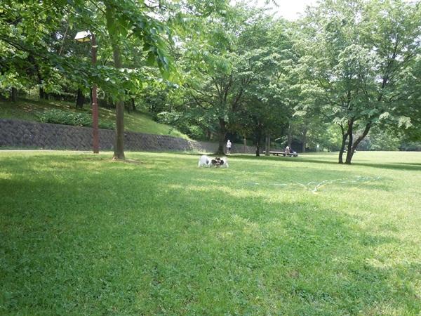ふるさと公園 新緑DSCN0975