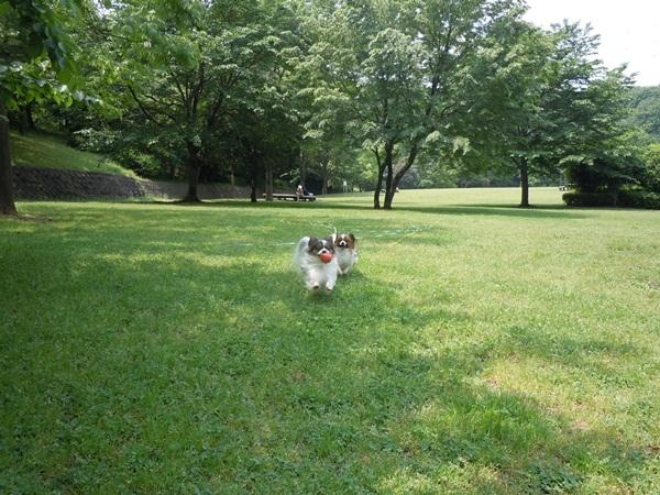 ふるさと公園 新緑DSCN0974