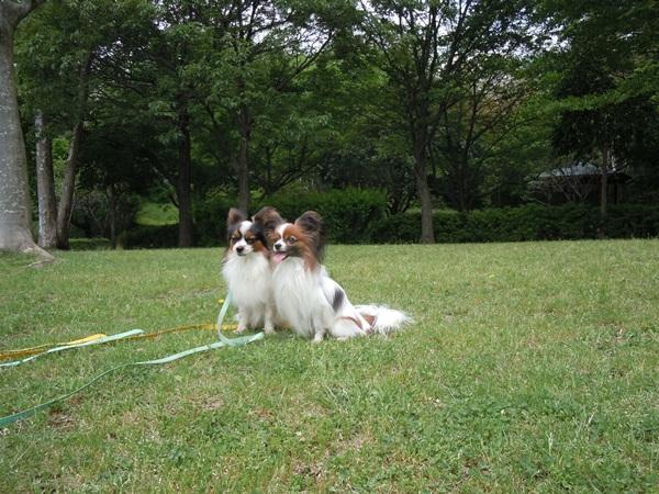 ふるさと公園 新緑DSCN0983