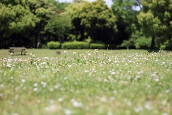ふるさと公園 新緑2DPP_0015