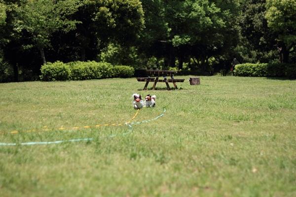 ふるさと公園 新緑2DPP_0017