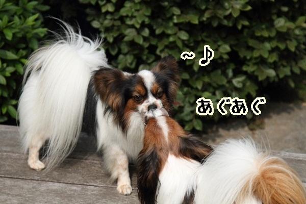2011_06_05 庭にてDPP_0006