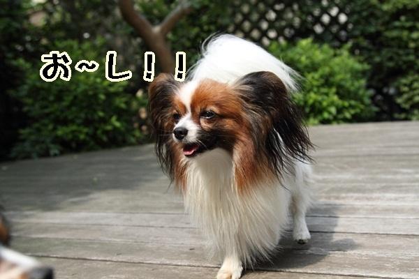 2011_06_05 庭にてDPP_0019