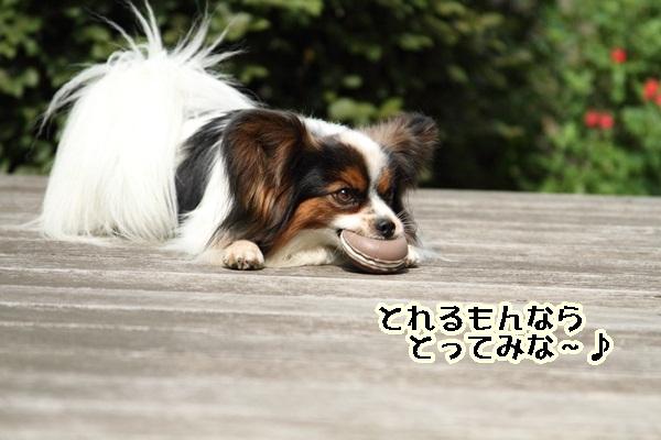 2011_06_05 庭にてDPP_0016