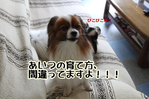 2011_06_05 庭にてDPP_0023