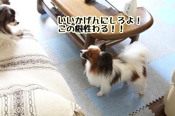 2011_06_05 庭にてDPP_0022