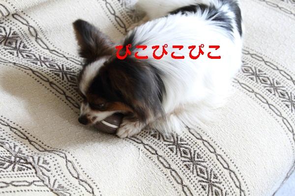2011_06_05 庭にてDPP_0021