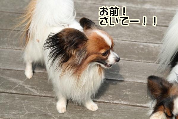 2011_06_05 庭にてDPP_0011