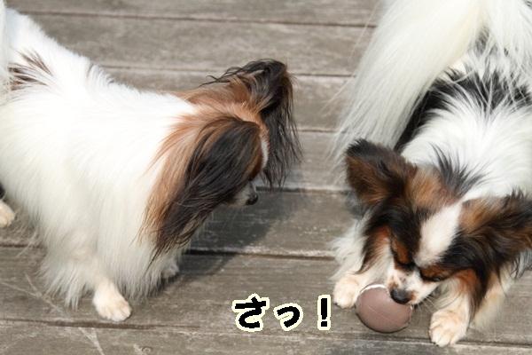 2011_06_05 庭にてDPP_0012