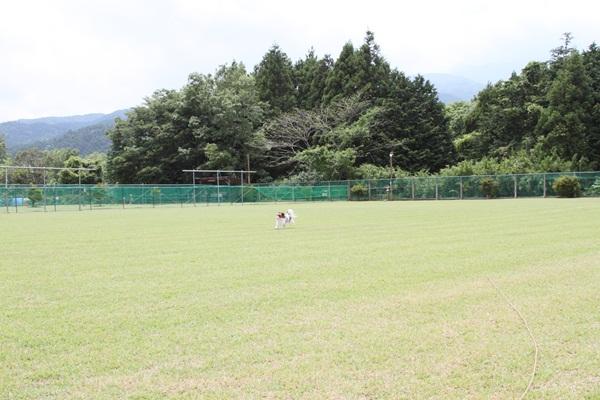 2011_06_09 裾野ドッグラン ブログ用DPP_0060