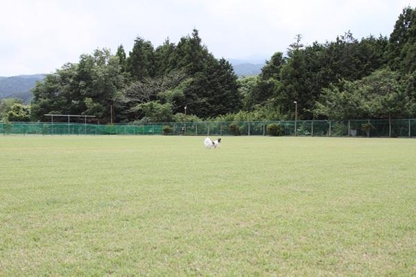 2011_06_09 裾野ドッグラン ブログ用DPP_0063