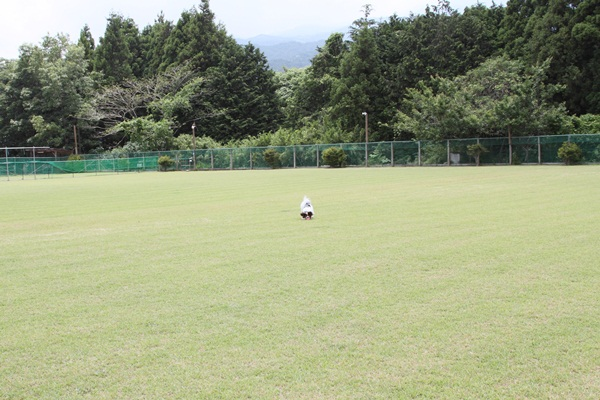 2011_06_09 裾野ドッグラン ブログ用DPP_0061
