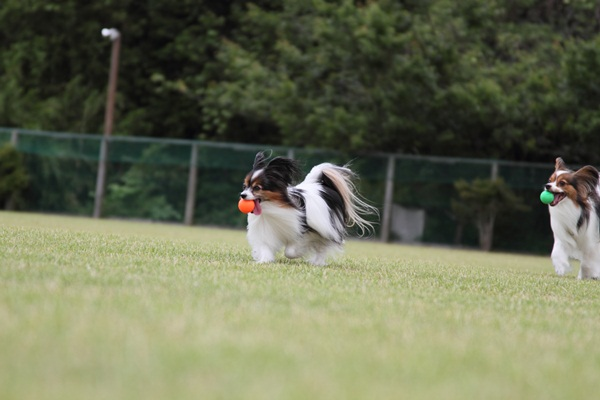 2011_06_09 裾野ドッグラン ブログ用DPP_0083