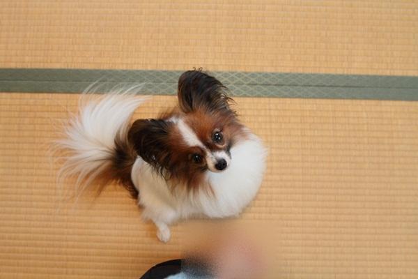 2011_07_21 JKCDPP_0009