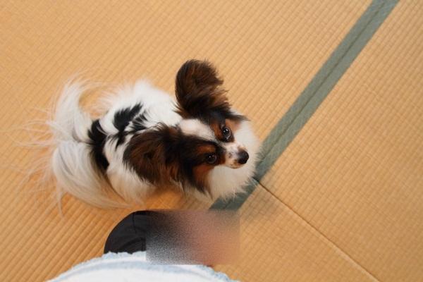 2011_07_21 JKCDPP_0014