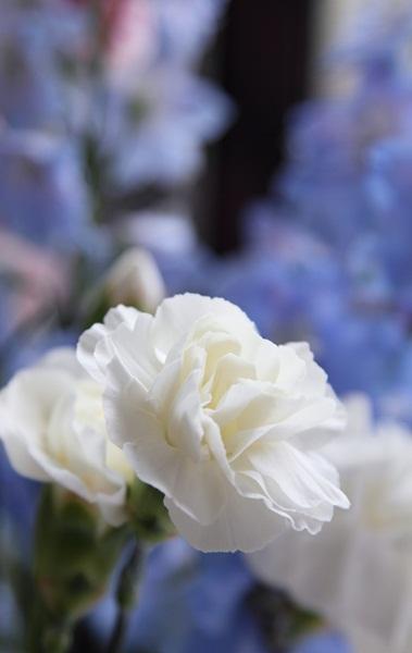2011_07_25 お花DPP_0001