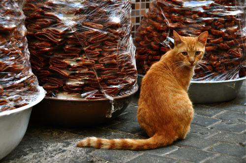 スークのネコさん