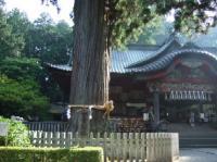 8/3 浅間神社 樹齢千年のご神木の杉