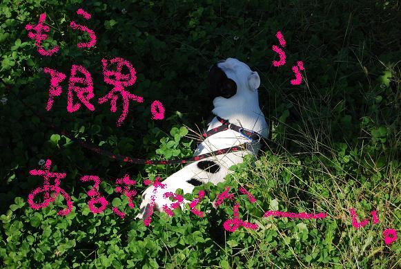 2008101311.jpg