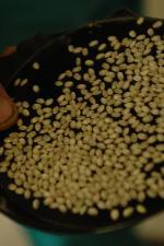 五百万石穀粒