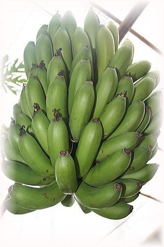 アグリの里 バナナ