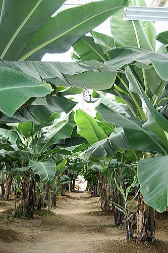 アグリの里バナナの道