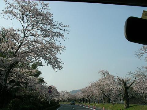 錦帯橋 004